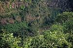 Knife Edge: Blick auf die Vegetation in der Schlucht - Victoriafälle (Zambia)