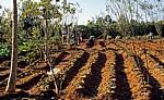 SOS Children's Village (Kinderdorf): Kinder im Gemüsegarten - Mzuzu