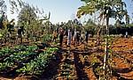 SOS Children's Village (Kinderdorf): Winkende Kinder im Gemüsegarten - Mzuzu