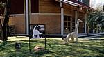 Cultural & Museum Centre Karonga (CMCK) - Karonga