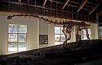Cultural & Museum Centre Karonga (CMCK): Malawisaurus - Karonga