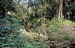 Sanje Falls (Wasserfälle) inmitten der Vegetation - Udzungwa Mountains National Park