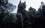 Regenwald - Udzungwa Mountains National Park