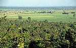 Blick über den Wald auf Palmen und Felder - Udzungwa Mountains National Park