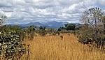 Landschaft - Mikumi Nationalpark