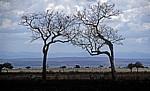 Blick über die Steppe auf die Uluguru Mountains (Gebirgskette) - Mikumi Nationalpark