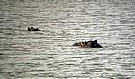 Flußpferdköpfe (Hippopotamus amphibius) im Wasser - Mikumi Nationalpark