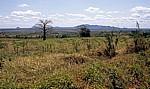 Landschaft mit Baobab (Affenbrotbaum, Adansonia digitata) - Selous Kisaki Road