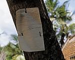 Öffentliche Mitteilung an einem Baum - Kisaki