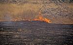 Buschfeuer - Selous Wildreservat