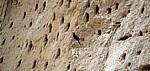 Bienenfresser (Merops apiaster) an seiner Nestanlage (Höhlen) - Rufiji