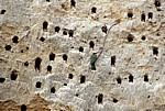 Bienenfresser (Merops apiaster) an ihrer Nestanlage (Höhlen) - Rufiji