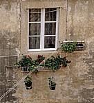 Stari Grad (Altstadt): Blick von der Stadtmauer - Blumenkästen und -töpfe vor einem Fenster - Dubrovnik