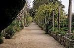 Arboretum von Trsteno: Gucetic-Lustgarten - Trsteno