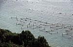 Malostonski zaljev (Kanal Malog Stona, Bucht von Mali Ston): Austernzucht - Gespanschaft Dubrovnik-Neretva