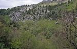 Cetina-Canyon: Vegetation - Gespanschaft Split-Dalmatien